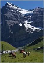 Bahnen der Jungfrau Region/586356/ein-jb-zug-auf-dem-weg Ein JB Zug auf dem Weg zur Höchsten Bahnstation , dem Jungfraujoch. Das Bild entstand oberhalb von der Kleine Scheidegg, im Hintergrund die schattige Eiger Nord Wand. 8. Aug.2016